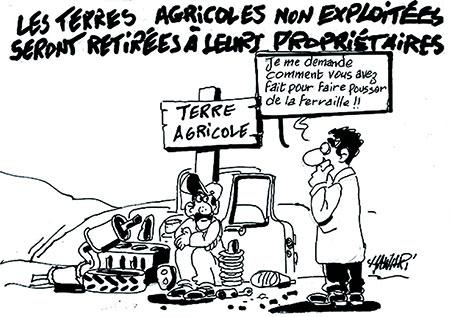 Les terres agricoles non exploitées seront retirées à leurs propriétaires - Hawari - La Tribune des Lecteurs - Gagdz.com