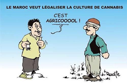 Le Maroc veut légaliser la culture de cannabis - Ghir Hak - Les Débats - Gagdz.com