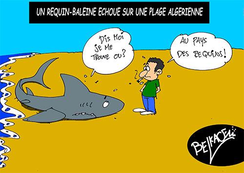 Un requin-baleine échoué sur une plage algérienne - Belkacem - Le Courrier d'Algérie - Gagdz.com