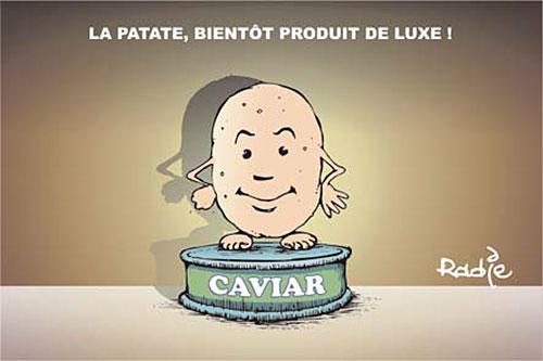 La patate bientôt produit de luxe - Ghir Hak - Les Débats - Gagdz.com