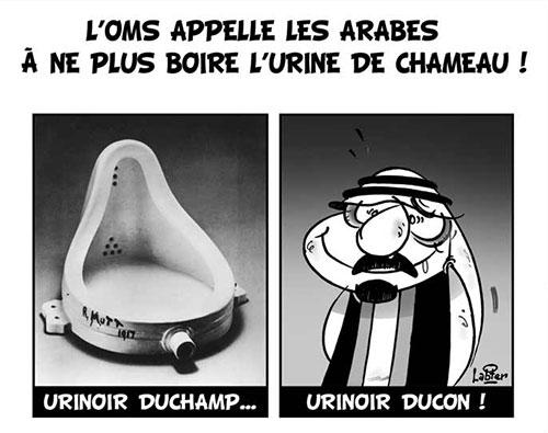 L'OMS appelle les arabes à ne pas boire l'urine de chameau - oms - Gagdz.com