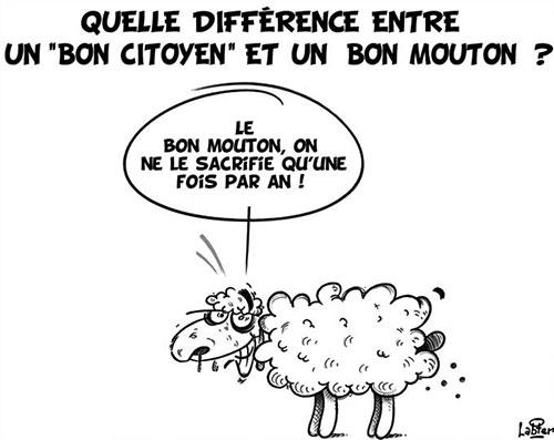 Quelle différence entre un bon vitoyen et un bon mouton ? - Vitamine - Le Soir d'Algérie - Gagdz.com