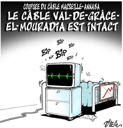 Coupure du câble Marseille-Annaba: Le câble Va-de-grâce el-mouradia est intact - Annaba - Gagdz.com