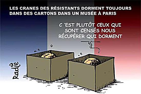Les cranes des résistants dorment toujours dans des cartons dans un musée à Paris