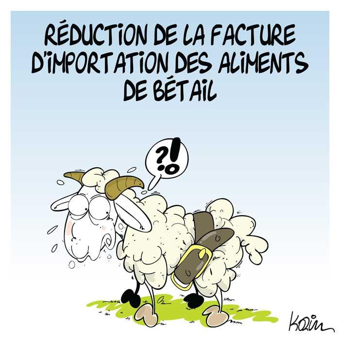 Réduction de la facture d'importation des aliments de bétail