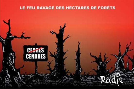 Le feu ravage des hectares de forêts